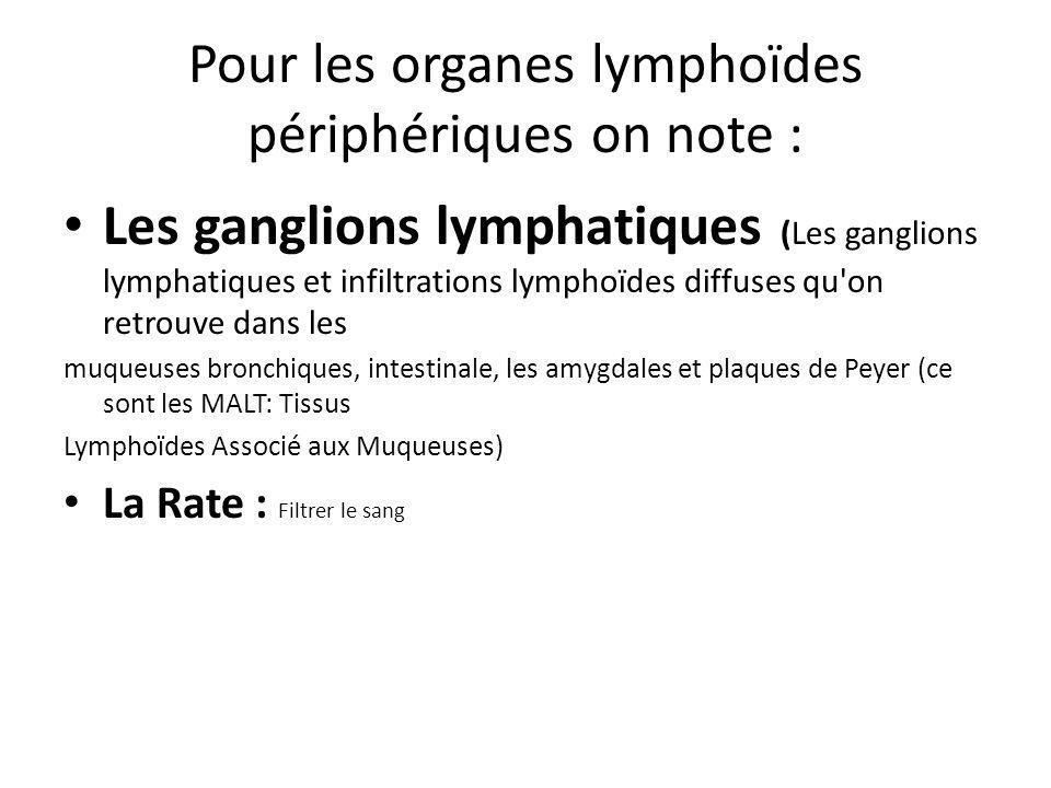 Pour les organes lymphoïdes périphériques on note :