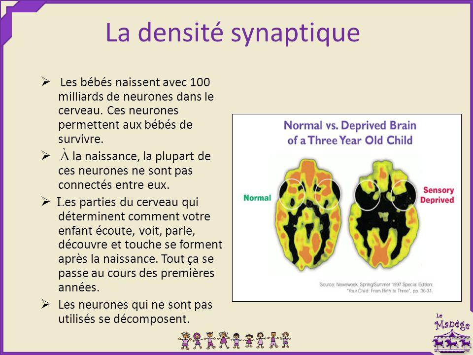 La densité synaptique Ø Les bébés naissent avec 100 milliards de neurones dans le cerveau. Ces neurones permettent aux bébés de survivre.