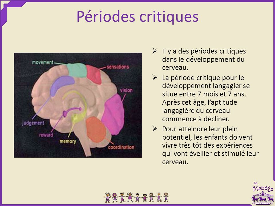 Périodes critiques Il y a des périodes critiques dans le développement du cerveau.
