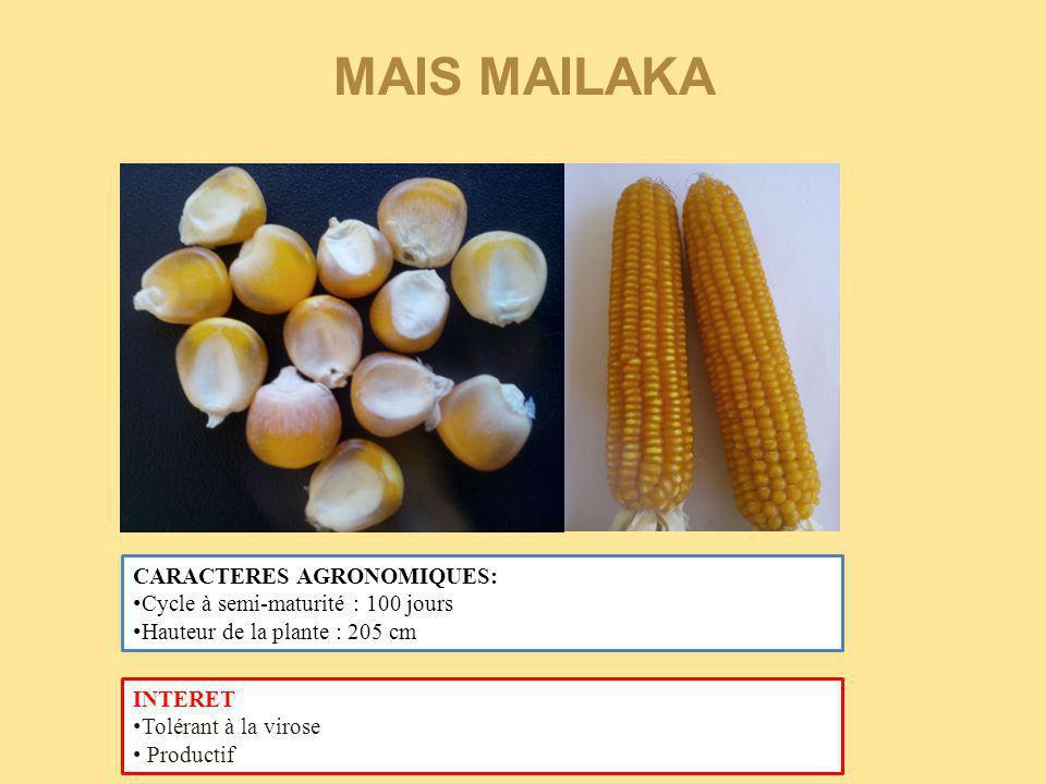 MAIS MAILAKA CARACTERES AGRONOMIQUES: