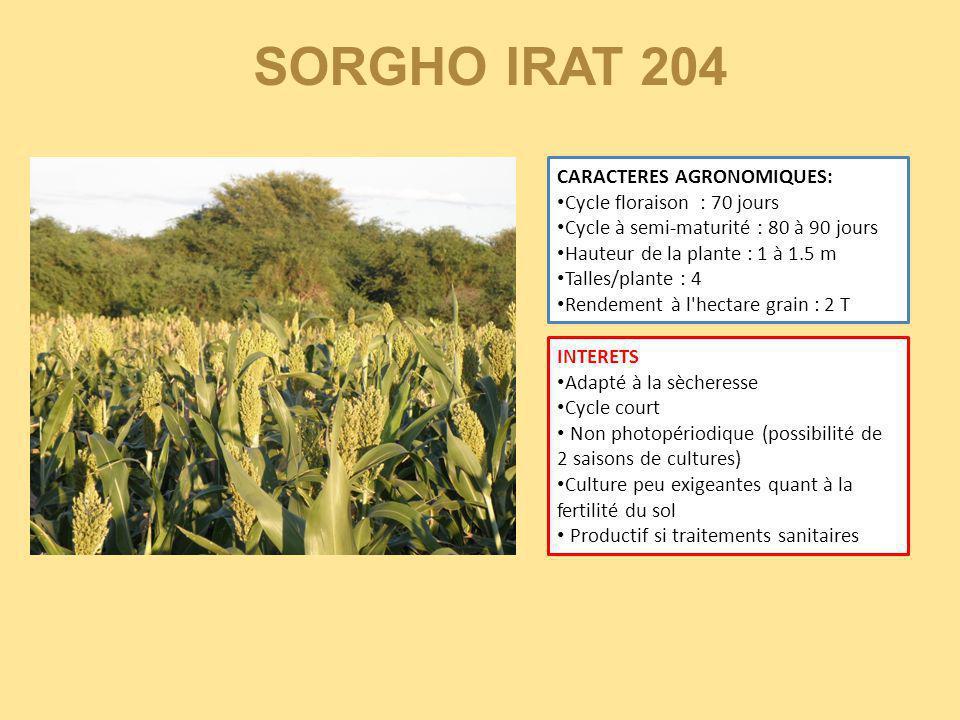 SORGHO IRAT 204 CARACTERES AGRONOMIQUES: Cycle floraison : 70 jours