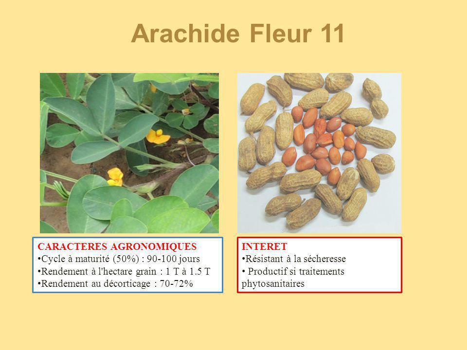 Arachide Fleur 11 CARACTERES AGRONOMIQUES