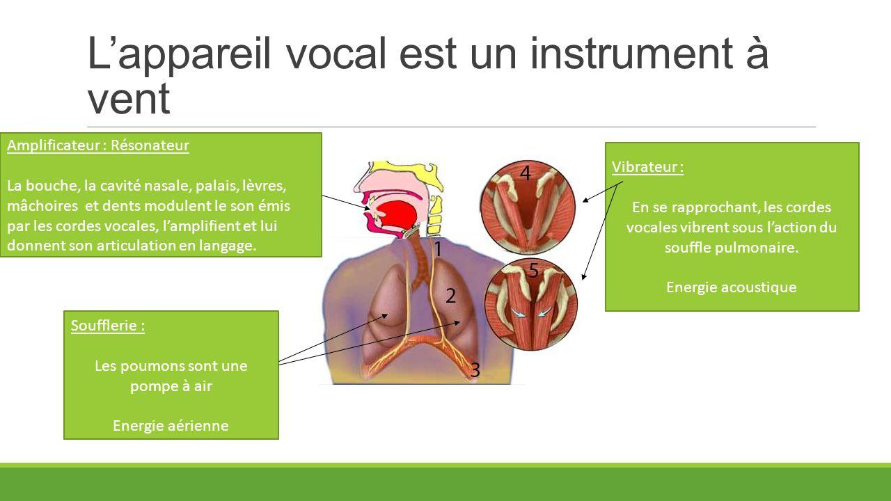 L'appareil vocal est un instrument à vent