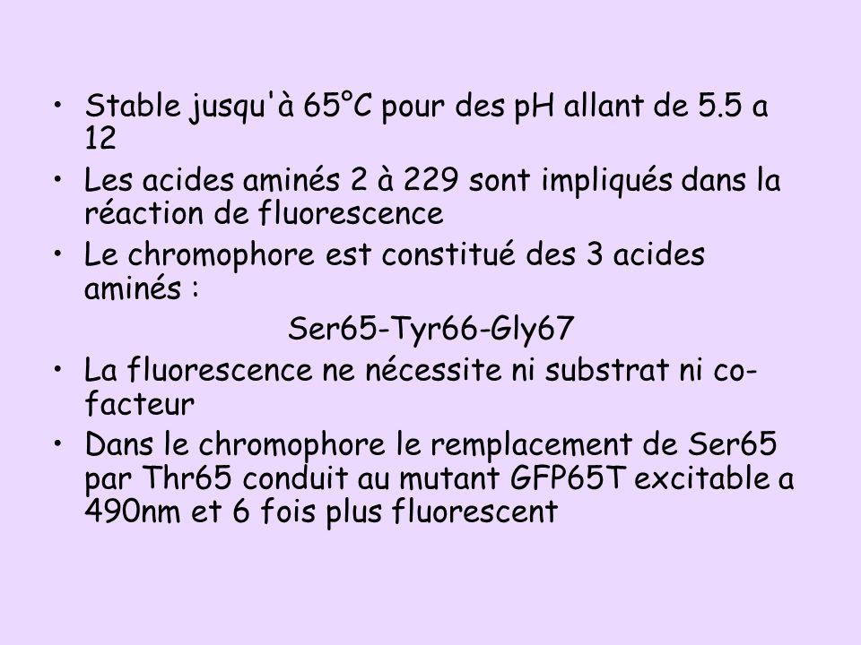 Stable jusqu à 65°C pour des pH allant de 5.5 a 12
