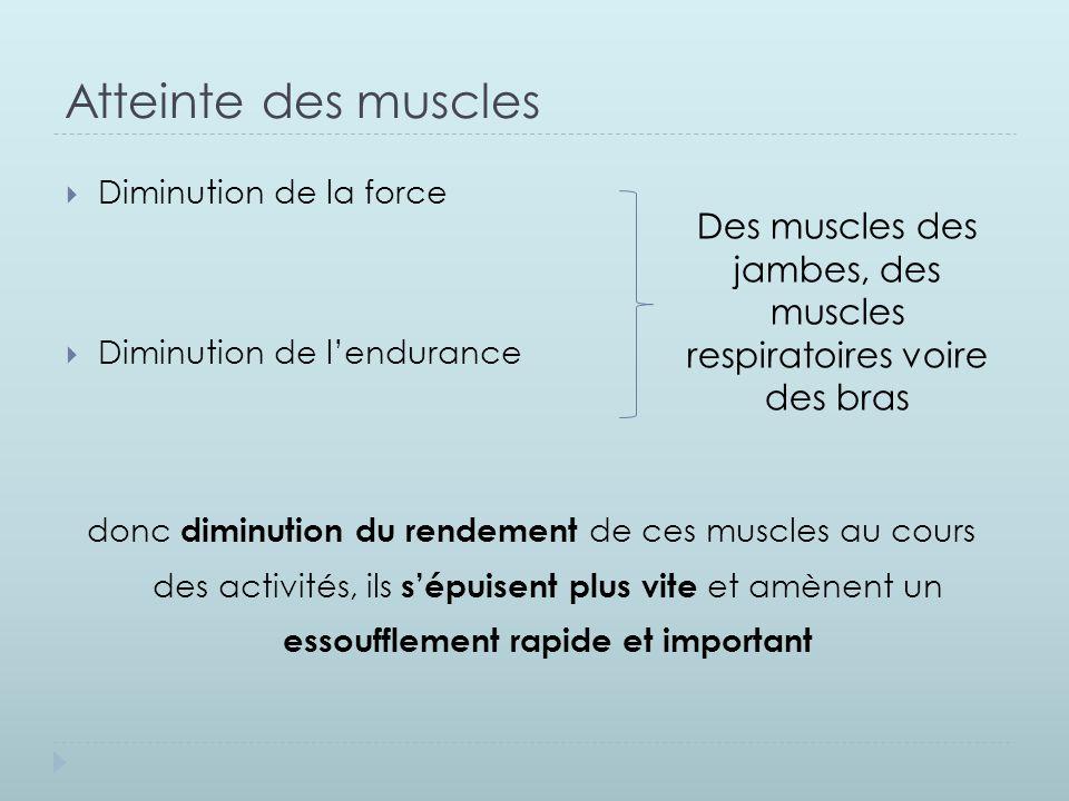 Des muscles des jambes, des muscles respiratoires voire des bras