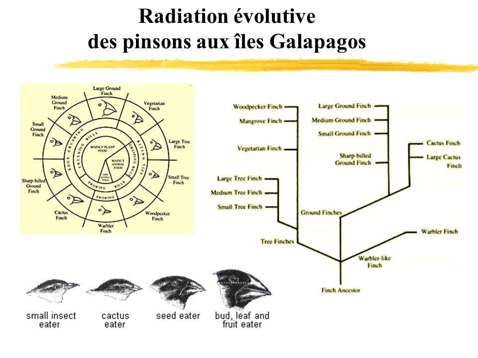 Radiation évolutive des pinsons aux îles Galapagos