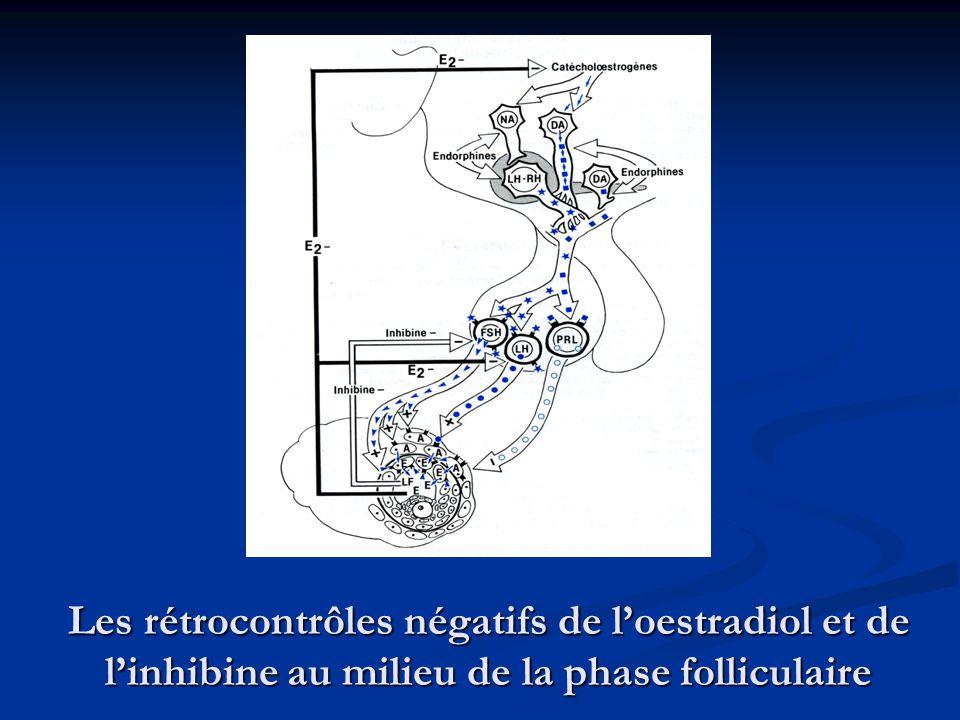 Les rétrocontrôles négatifs de l'oestradiol et de l'inhibine au milieu de la phase folliculaire