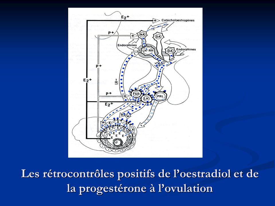 Les rétrocontrôles positifs de l'oestradiol et de la progestérone à l'ovulation