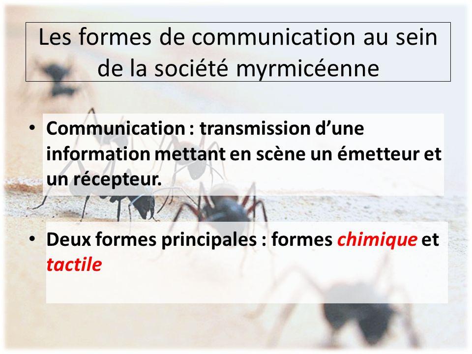 Les formes de communication au sein de la société myrmicéenne