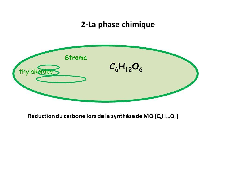 2-La phase chimique C6H12O6 Stroma thylakoïdes