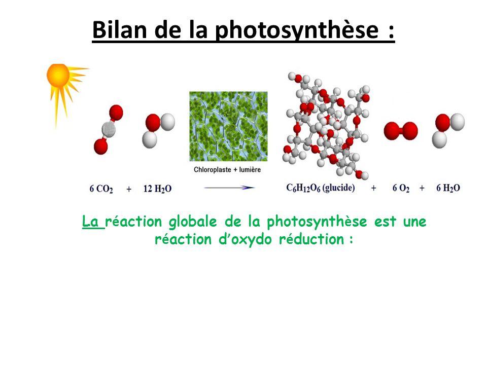 Bilan de la photosynthèse :