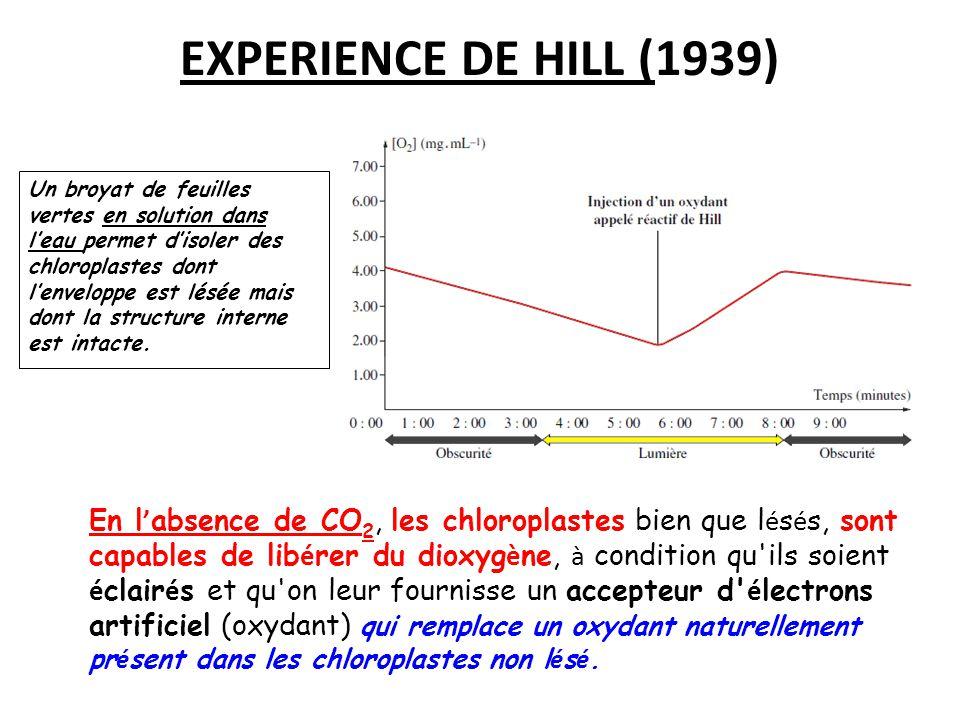 EXPERIENCE DE HILL (1939)