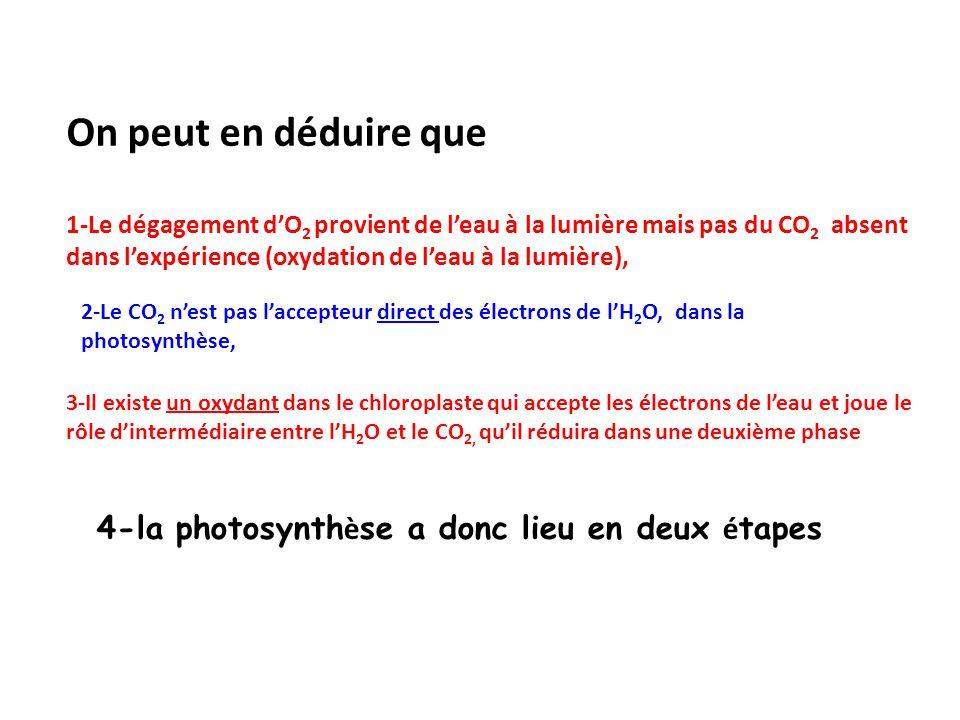 On peut en déduire que 1-Le dégagement d'O2 provient de l'eau à la lumière mais pas du CO2 absent dans l'expérience (oxydation de l'eau à la lumière),