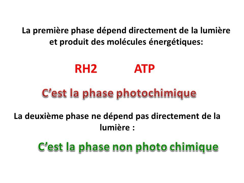 La deuxième phase ne dépend pas directement de la lumière :