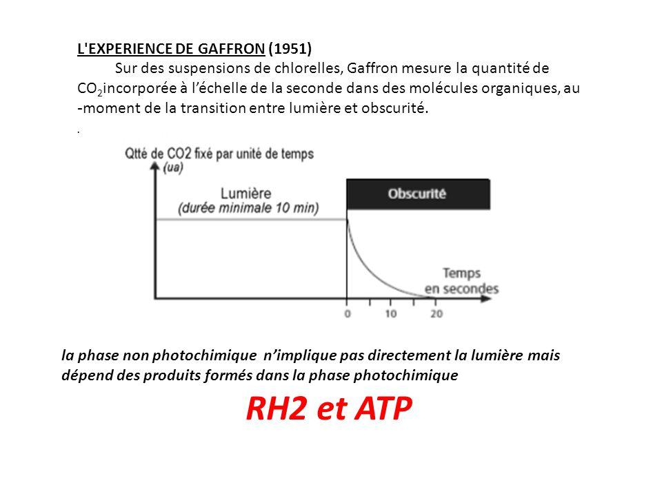 RH2 et ATP L EXPERIENCE DE GAFFRON (1951)
