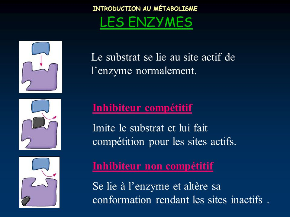 INTRODUCTION AU MÉTABOLISME
