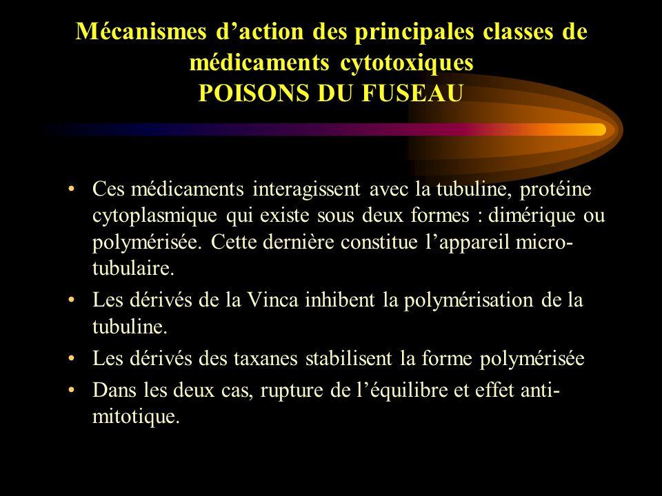 Mécanismes d'action des principales classes de médicaments cytotoxiques POISONS DU FUSEAU