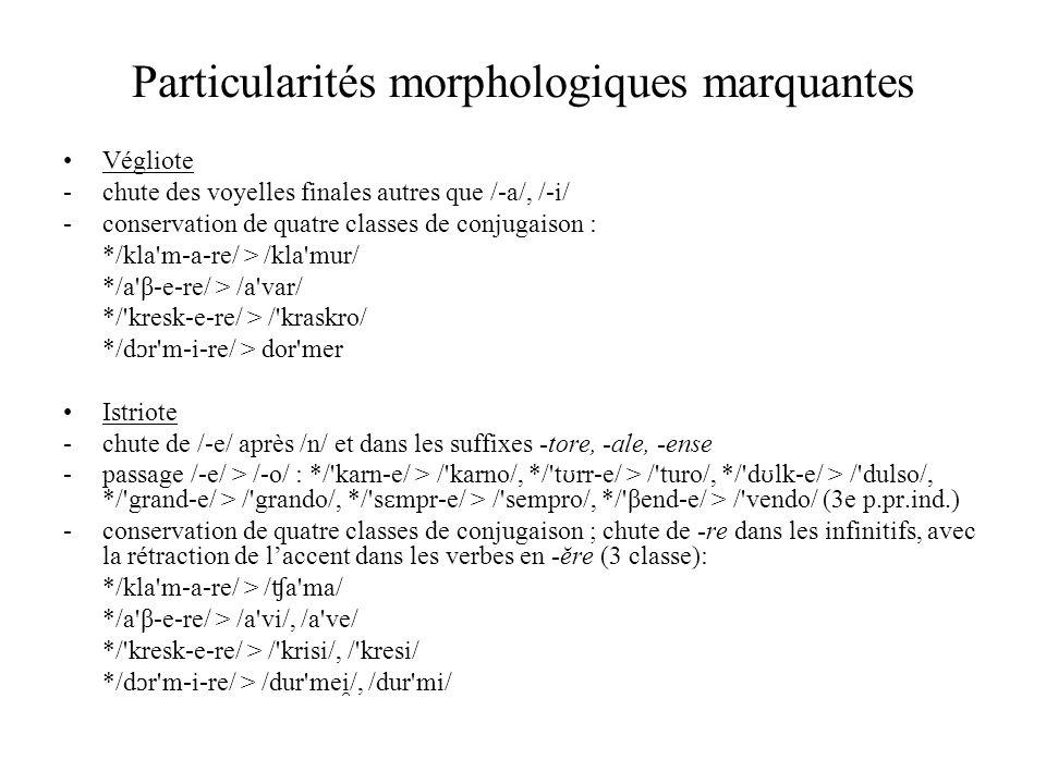 Particularités morphologiques marquantes