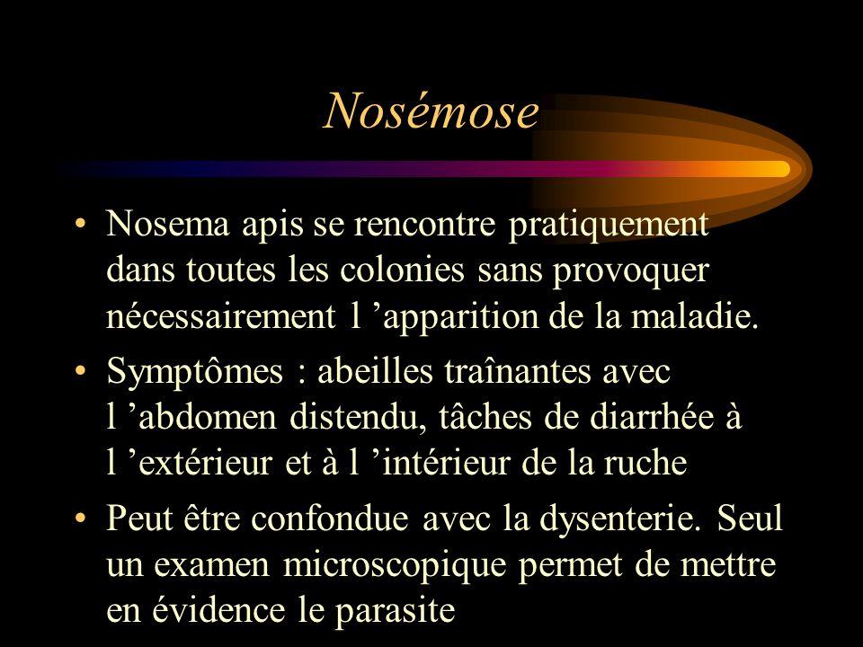 Nosémose Nosema apis se rencontre pratiquement dans toutes les colonies sans provoquer nécessairement l 'apparition de la maladie.