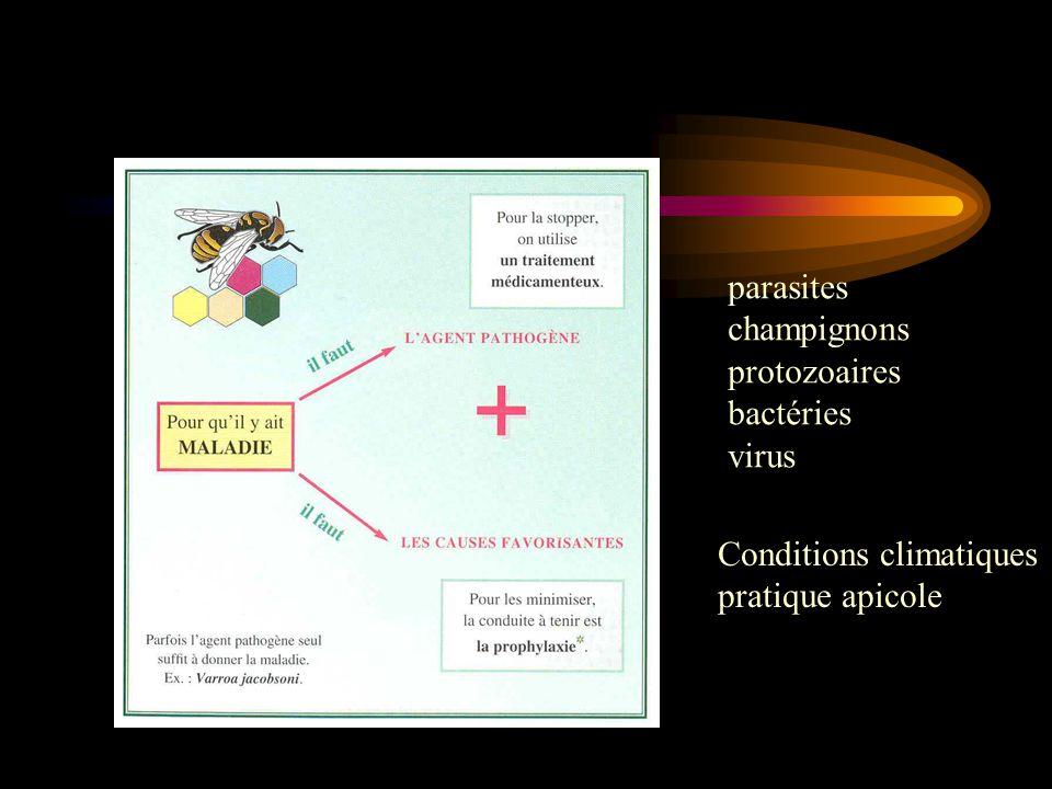 parasites champignons protozoaires bactéries virus Conditions climatiques pratique apicole