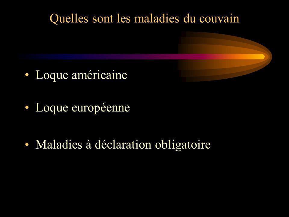 Quelles sont les maladies du couvain