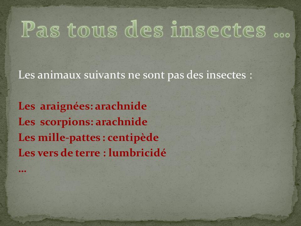 Pas tous des insectes … Les animaux suivants ne sont pas des insectes : Les araignées: arachnide.