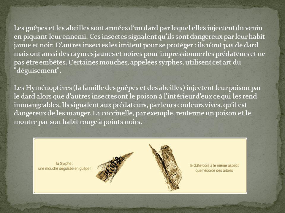 Les guêpes et les abeilles sont armées d'un dard par lequel elles injectent du venin en piquant leur ennemi. Ces insectes signalent qu'ils sont dangereux par leur habit jaune et noir. D'autres insectes les imitent pour se protéger : ils n'ont pas de dard mais ont aussi des rayures jaunes et noires pour impressionner les prédateurs et ne pas être embêtés. Certaines mouches, appelées syrphes, utilisent cet art du déguisement .