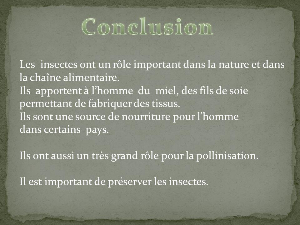 Conclusion Les insectes ont un rôle important dans la nature et dans la chaîne alimentaire.