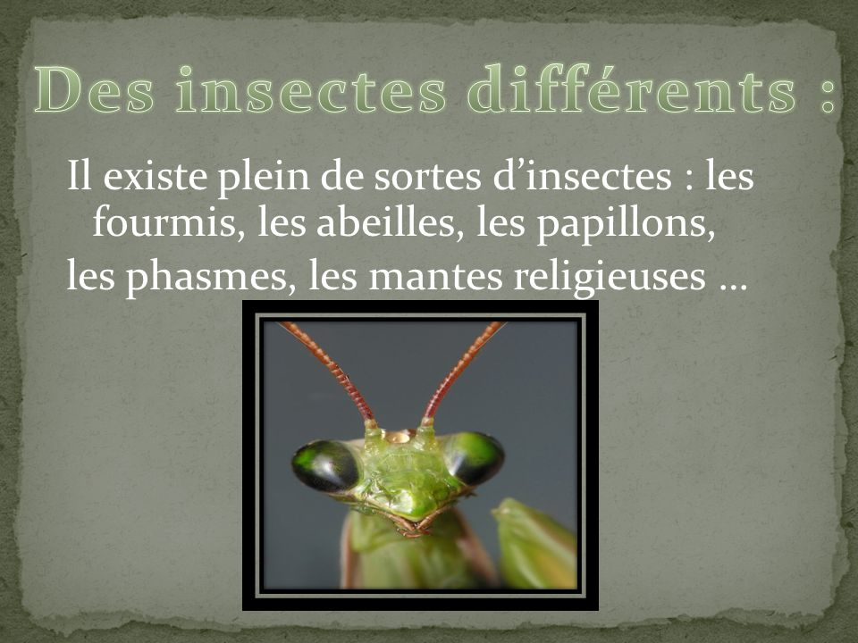 Des insectes différents :