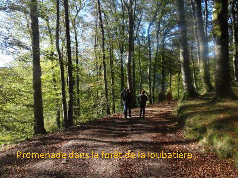 Promenade dans la forêt de la loubatière . .
