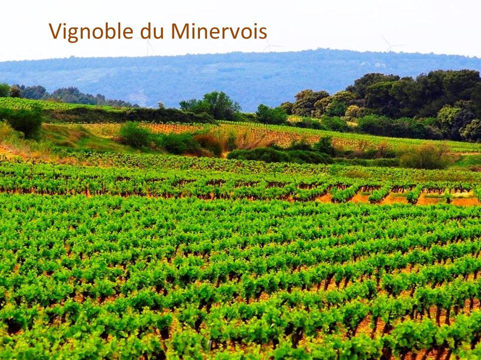 Vignoble du Minervois Vignoble du Minervois
