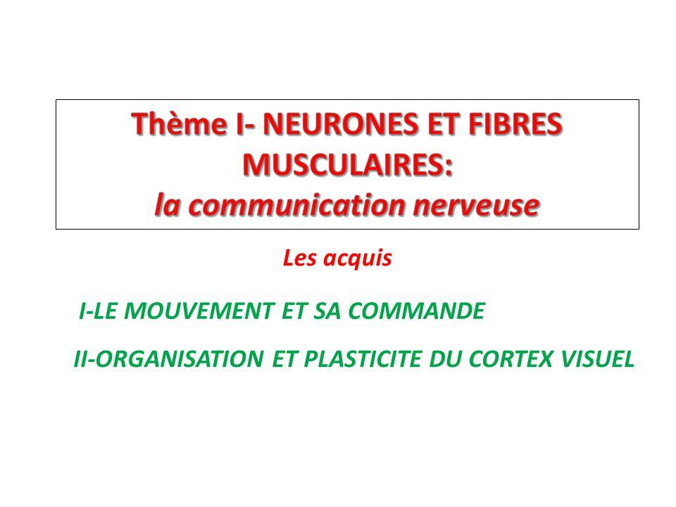 Thème I- NEURONES ET FIBRES MUSCULAIRES: la communication nerveuse