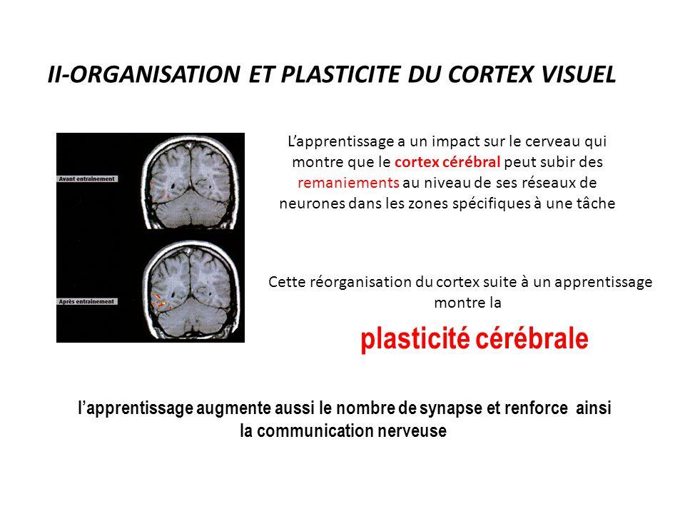 II-ORGANISATION ET PLASTICITE DU CORTEX VISUEL