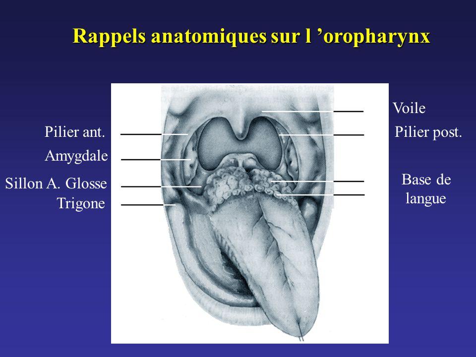 Rappels anatomiques sur l 'oropharynx