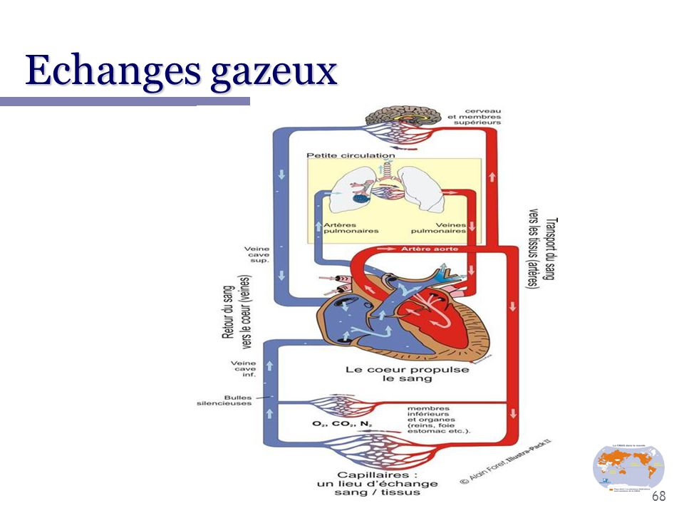 Echanges gazeux