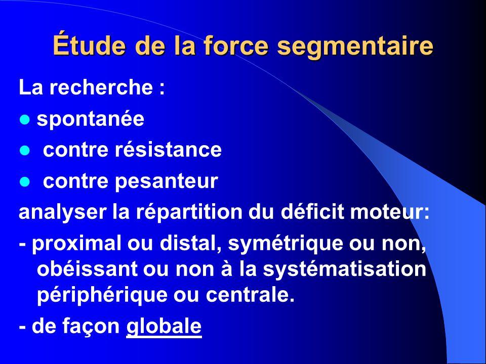 Étude de la force segmentaire
