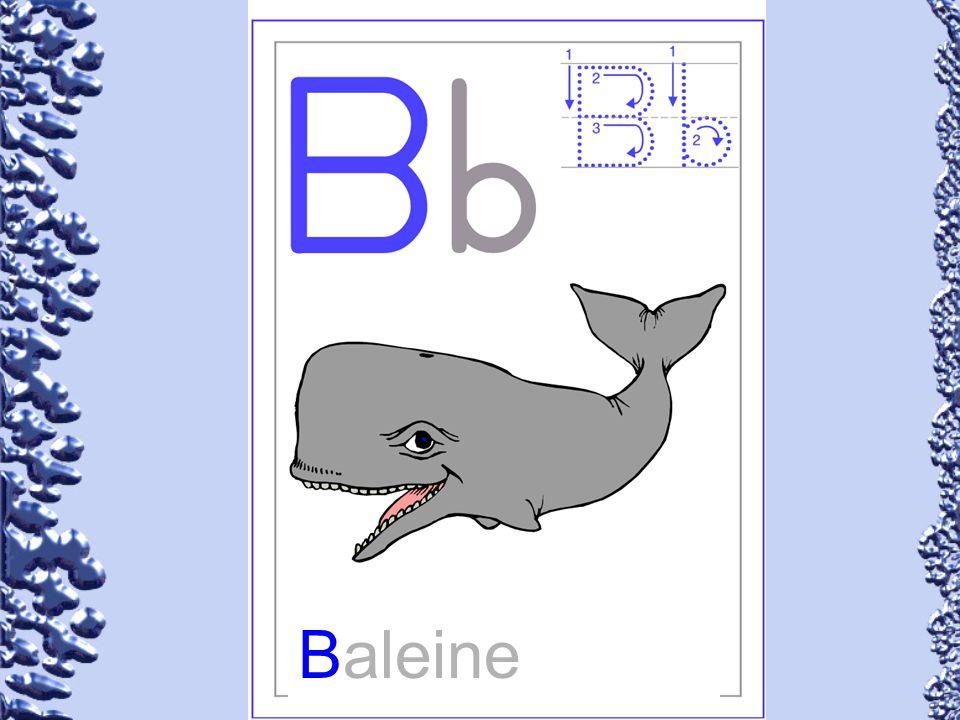 Baleine 54
