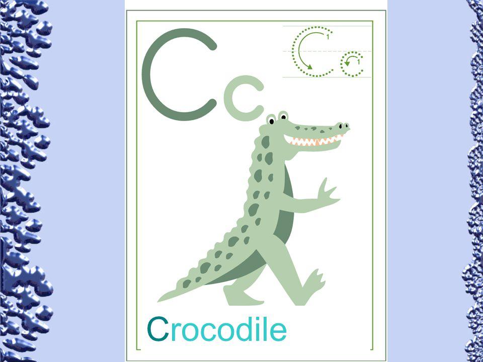 Crocodile 55