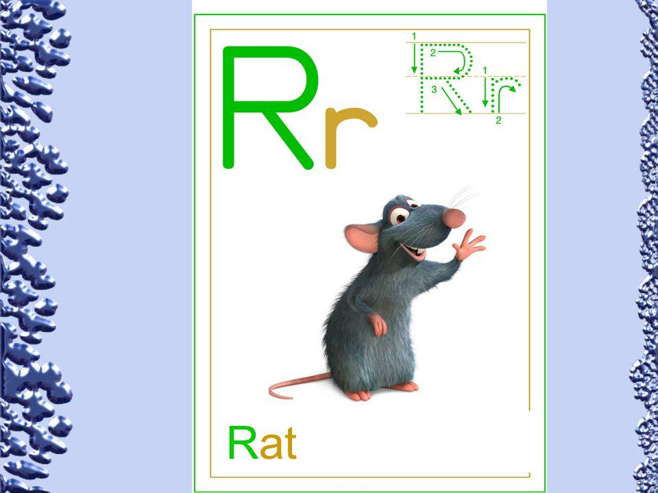 Rat 70