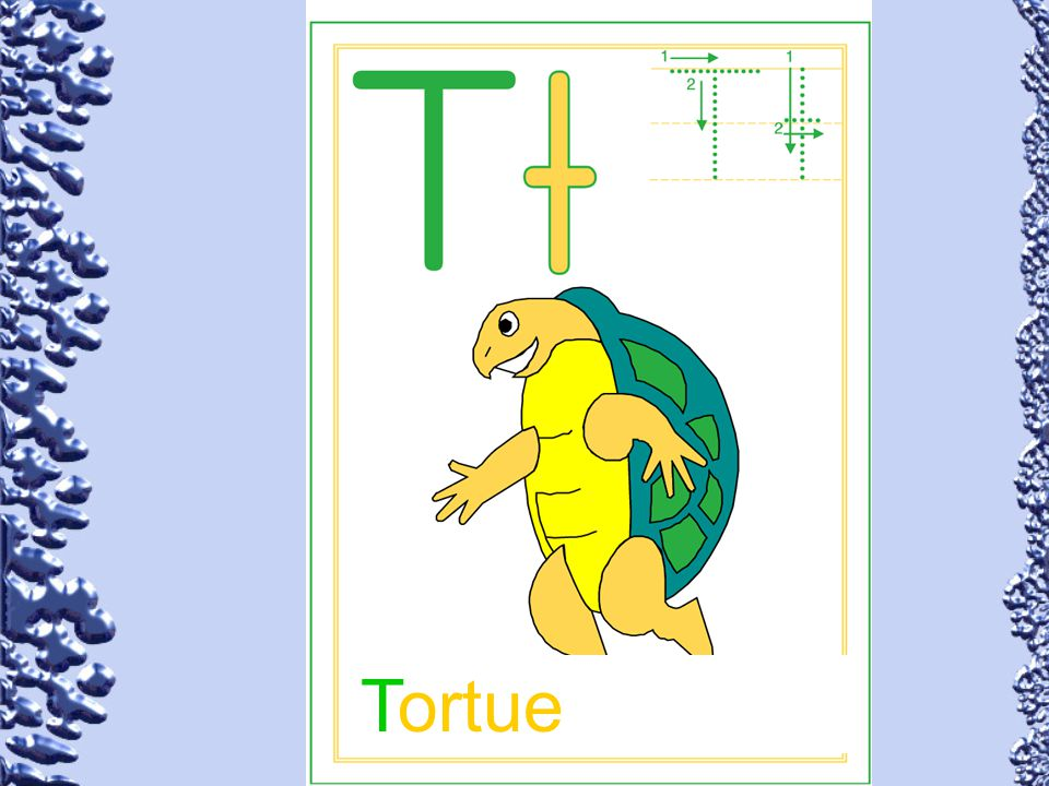 Tortue 72