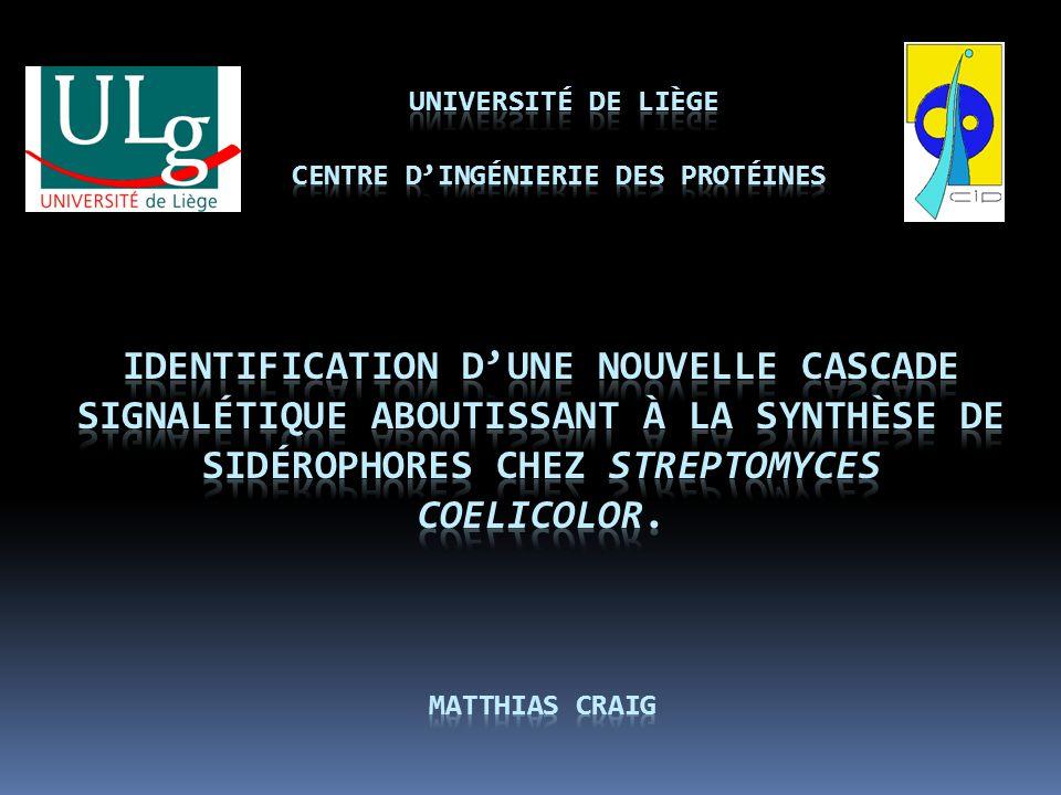 Université de Liège Centre d'ingénierie des protéines Identification d'une nouvelle cascade signalétique aboutissant à la synthèse de sidérophores chez Streptomyces coelicolor.