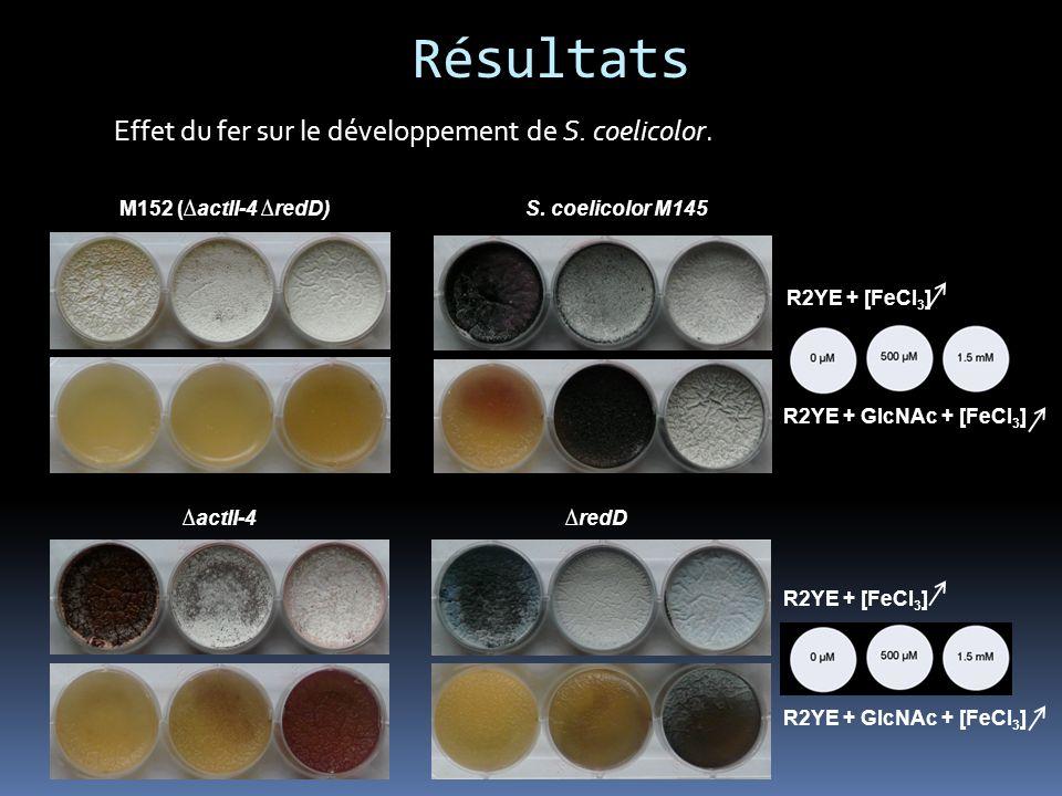 Résultats Effet du fer sur le développement de S. coelicolor.