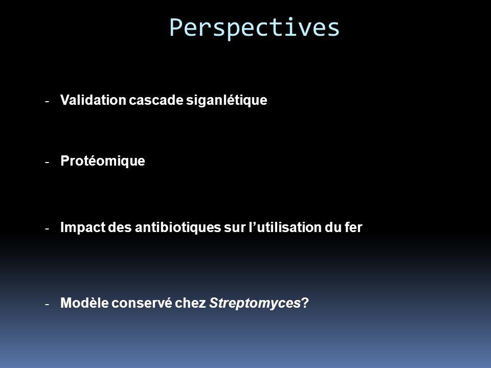 Perspectives Validation cascade siganlétique Protéomique