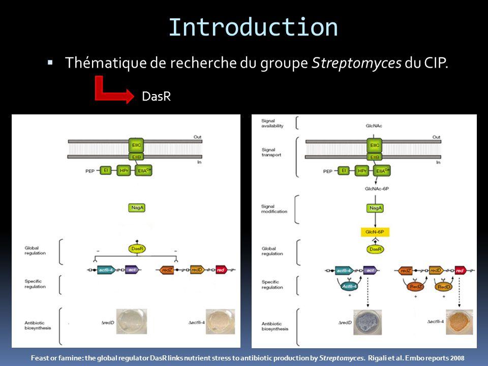 Introduction Thématique de recherche du groupe Streptomyces du CIP.