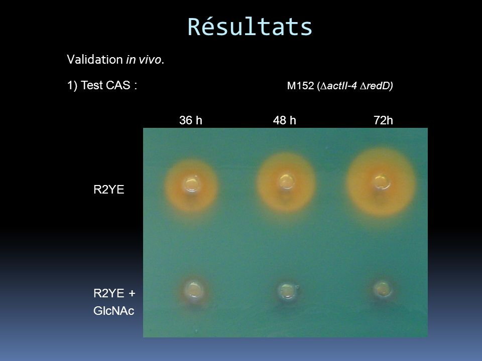 Résultats Validation in vivo. 1) Test CAS : M152 (∆actII-4 ∆redD)