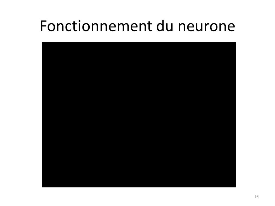Fonctionnement du neurone