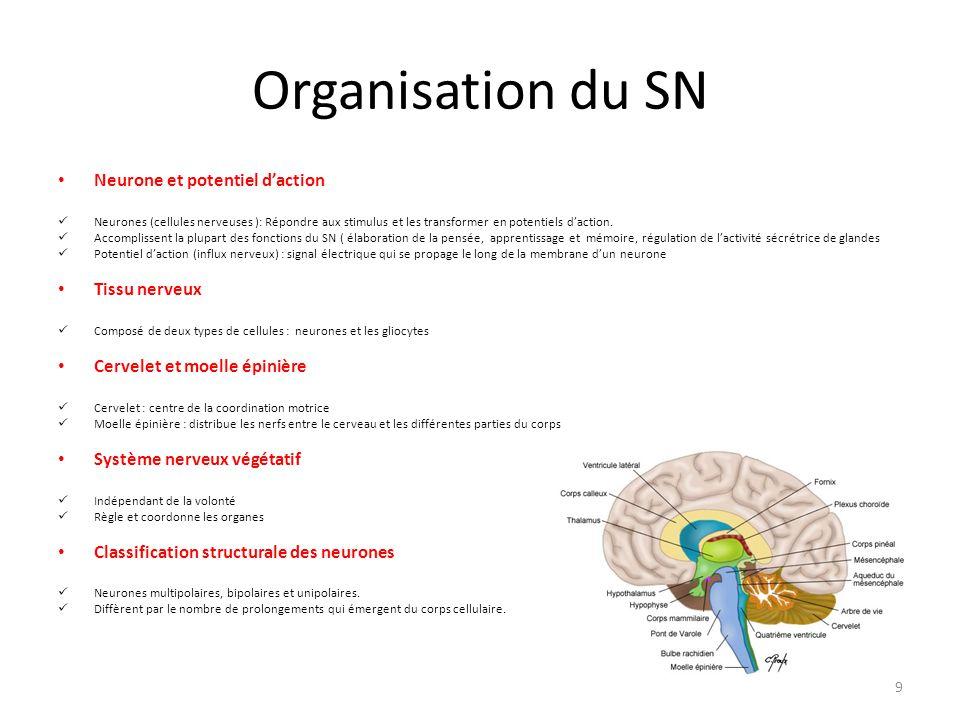 Organisation du SN Neurone et potentiel d'action Tissu nerveux