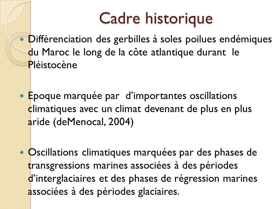 Cadre historique Différenciation des gerbilles à soles poilues endémiques du Maroc le long de la côte atlantique durant le Pléistocène.