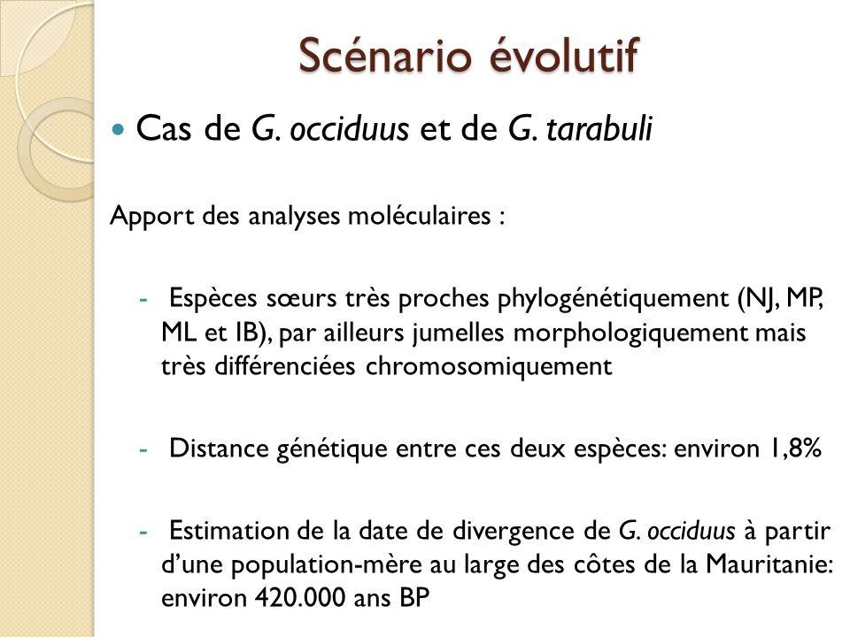 Scénario évolutif Cas de G. occiduus et de G. tarabuli