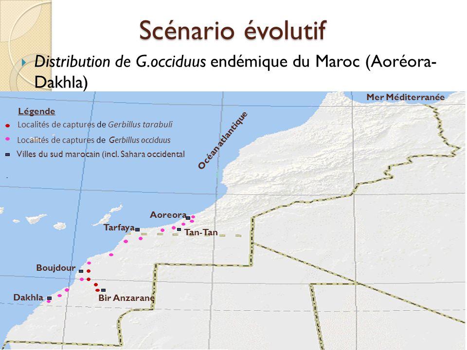 Scénario évolutif Distribution de G.occiduus endémique du Maroc (Aoréora- Dakhla) Tarfaya. Aoreora.